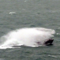 Spirit of Guernsey off St Martin's Point 26-01-14 Pic by Tony Rive (10).jpg