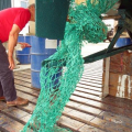 A mass of Green Fishing Net wrapped around Thiody's Prop 29-08-14 Pic by Tony Rive (2).jpg