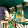 Simon Hall cutting away the Net from the Prop of Thiody 29-08-14 Pic by Tony Rive.jpg